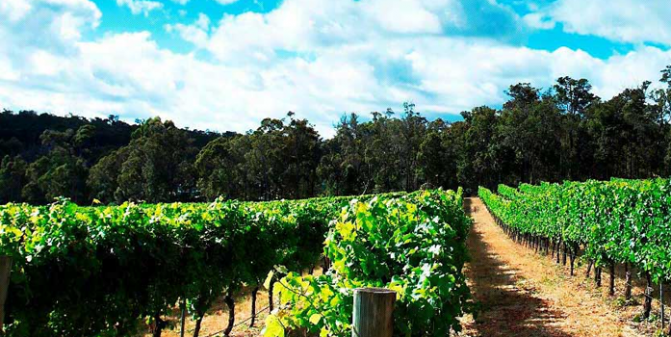 APSU wins Accolade Wines Managed Services Contract after Successful Project